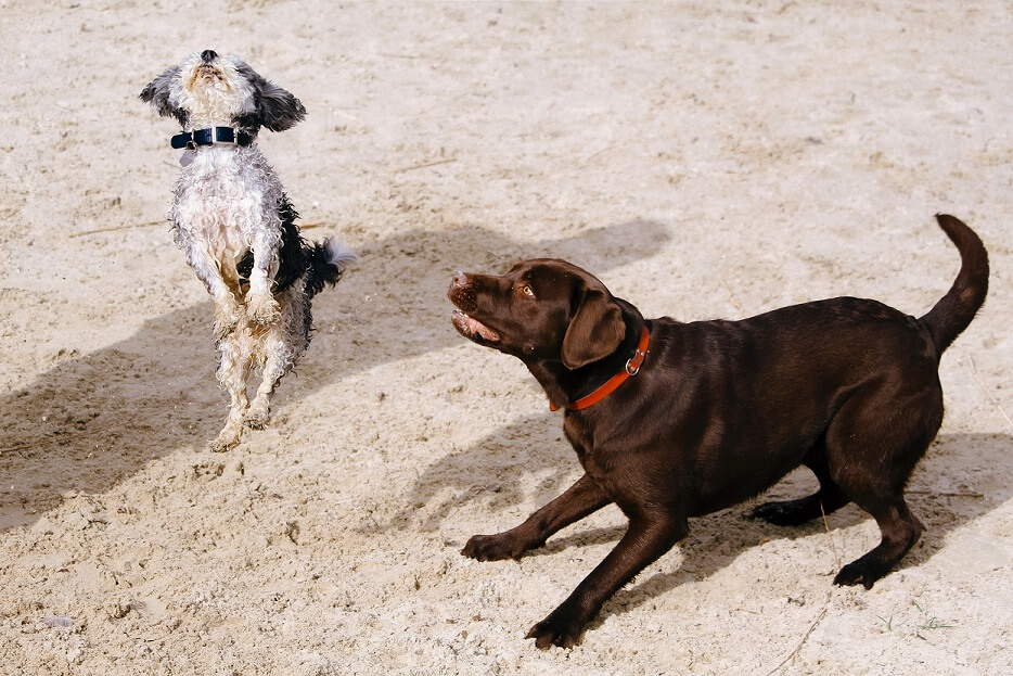 two dogs fighting at park